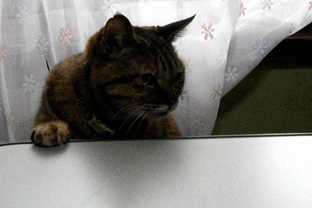 このようなサンマラーメンを狙うのは、猫くらいなものだろう
