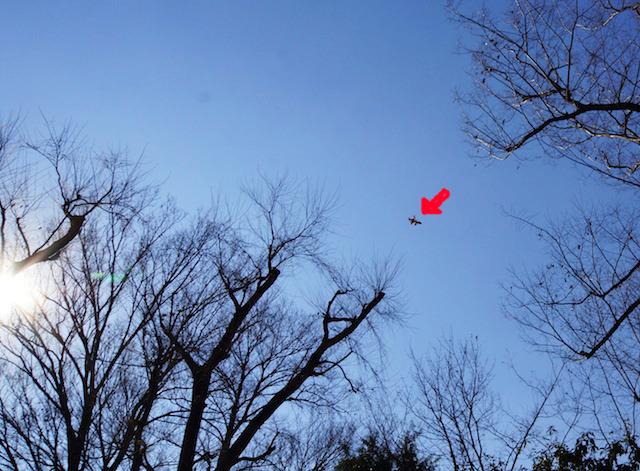 けっこう高くまで飛んでいった。イカロス!