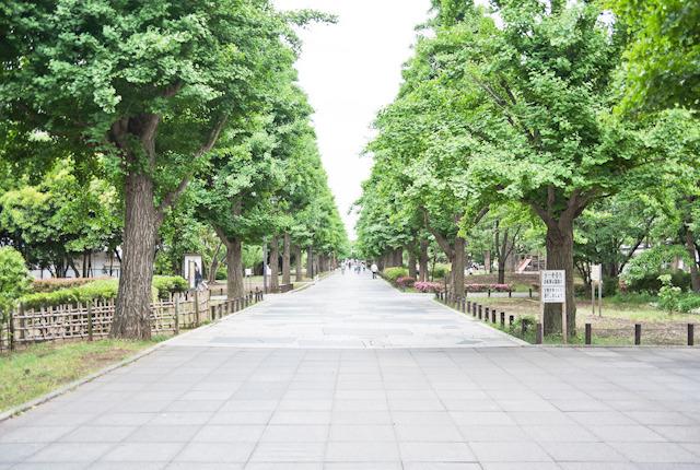 南北に走る団地内の目抜き通り。「いちょう通り」の名の通り、銀杏並木が充実。