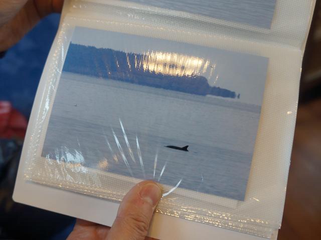 途中、イルカの棲む湾があり、運が良ければ目の前でジャンプするとの熱い説明。社員の撮影した熱いイルカ写真ホルダーが客席に回されたが、古賀さん容赦なく「遠くからだとイルカもネッシーっぽいですね」