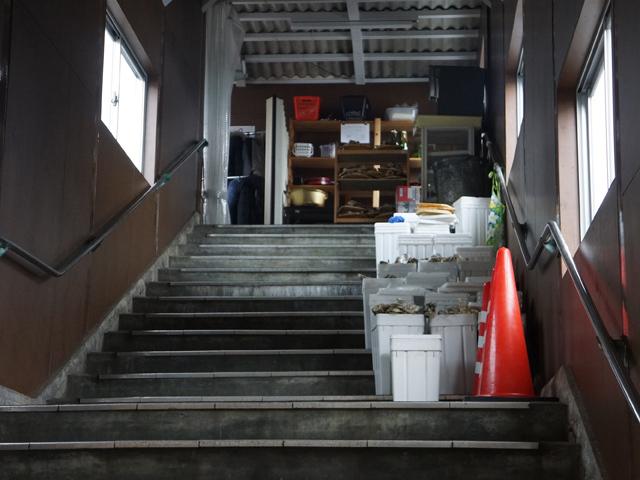 あの階段には…牡蠣の殻?が高層ビル群のように連なっており…。