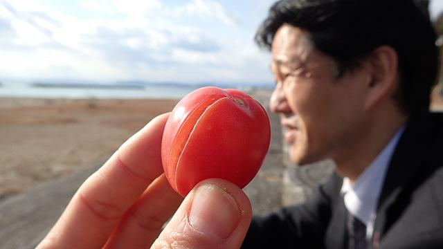 たしかに美味しいですね、このトマト。甘くて。