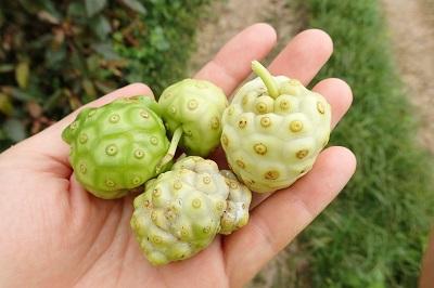 味見に十分、かつ余裕を持って食べきれる量だけ収穫。白っぽく熟したものと、まだ緑色が残るものも試してみる。