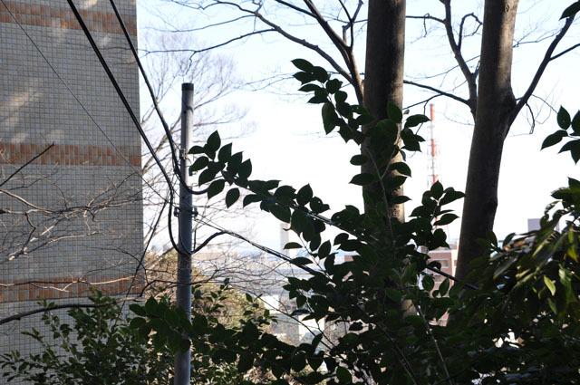 木々の隙間から見える風景からも「だいぶ上ってきた」ことが実感できる