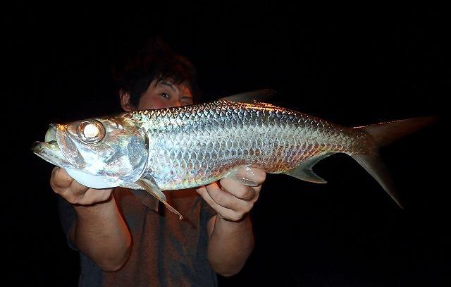 というわけで沖縄で釣ってきたよ。