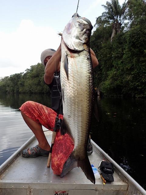 こちらは大西洋に暮らす大魚、本家のターポン。全長2メートルを超える、釣り人たちのスター。が、やはり味はあんまりおいしくないらしい。