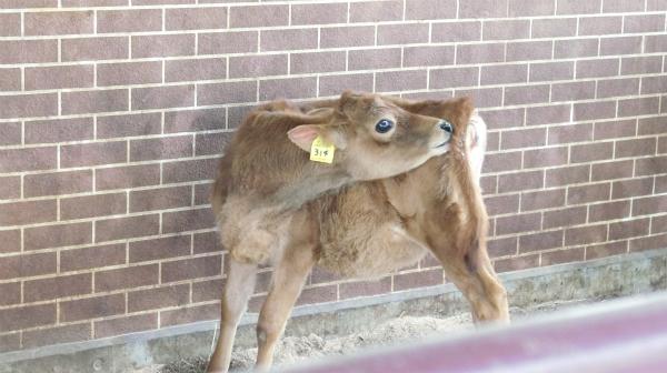 子牛がかわいいので全て許された。