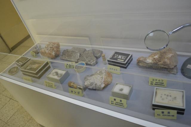 古生代の化石