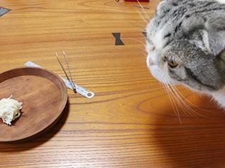 撮影中、美味そうな匂いのせいでずっと猫に邪魔された。猫はイカ駄目だ。