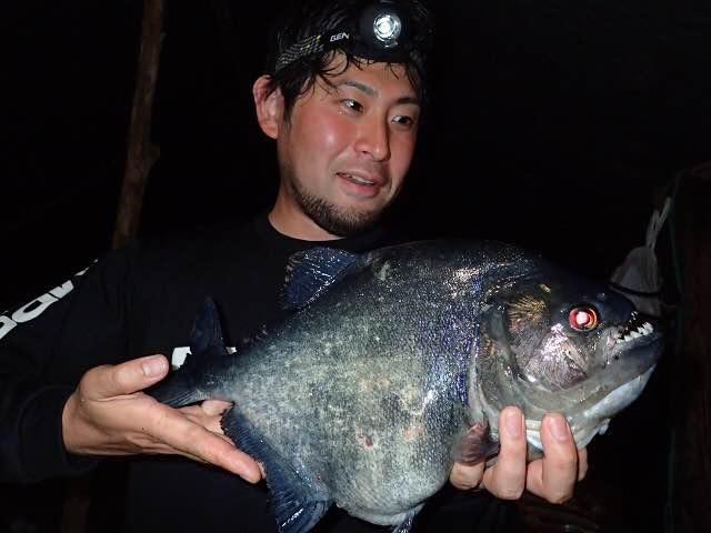 僕も少しは釣りに参加。ピラニアの中でも特にでかいブラックピラニアが釣れた。