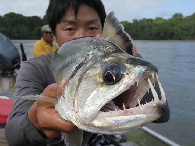 下アゴに生えた牙が特徴のペーシュ・カショーロ(バヤーラ/パヤーラ)。