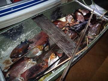 地元の漁師さんの船を覗くとエライことになっていた。しかもこれ全部、弓矢での獲物。アマゾン、自然も人もとんでもない。