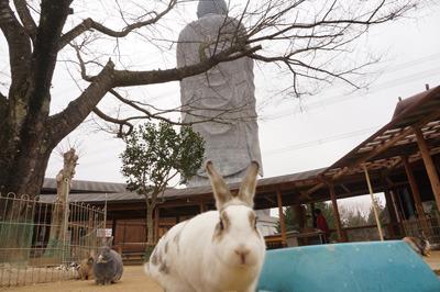 ウサギ、そして大仏