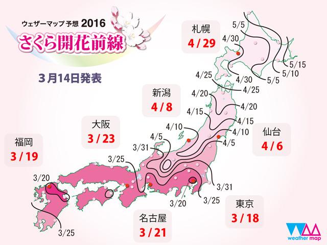 もう今週末にも桜の開花がチラホラと?