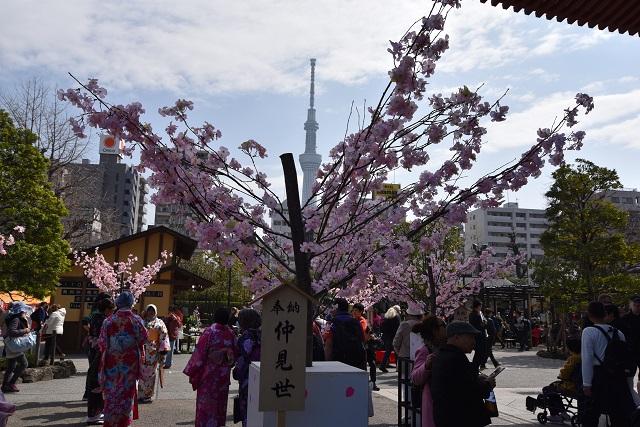 桜とスカイツリーの生け花