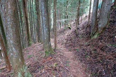 ハイキングコースを歩く。虫の姿はほとんど無い。