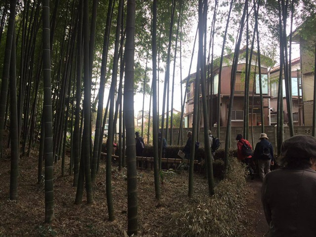 都内有数の竹林だし、定番のピクニックコースなんだろう。