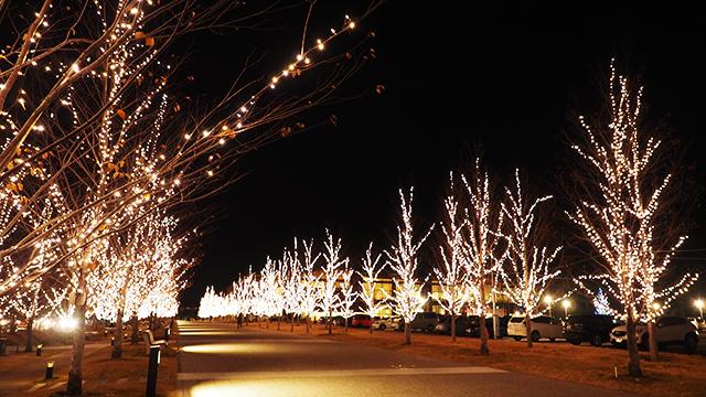 クリスマス前だったというのもあってイルミネーションが綺麗。