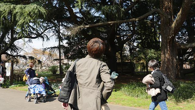 松林にたどり着くまでに巨木を見つけてはふらふら近寄っていく安藤