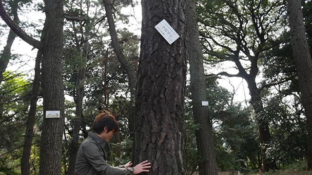 そしていよいよ松林に。こちらはクロマツである。かつてないゴワゴワ感