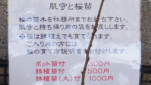 1000円、500円、300円
