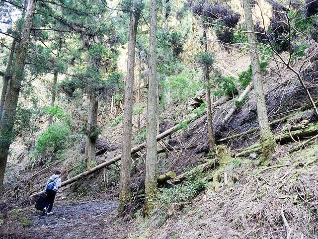 そこそこの山道である。