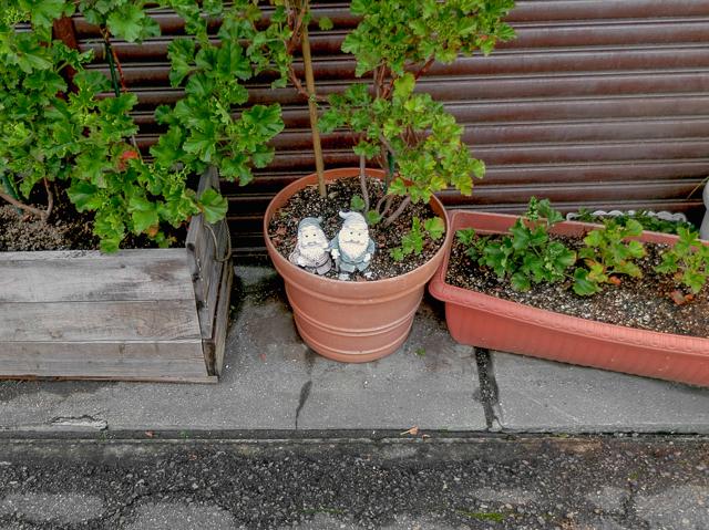 鉢植え内に2人。とたんにカップルに見えてくる。薄い本の出番だ。