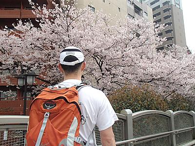 桜満開の花見ラン。