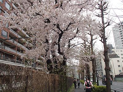 加賀美さんは都合により浅草合流、新橋離脱。主に関谷さんと進みます。