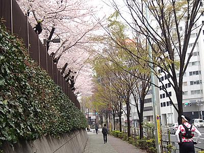 防衛庁の桜も満開。この辺りは東京マラソンのコースにもなっている。