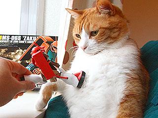 ザクに戸惑う猫。