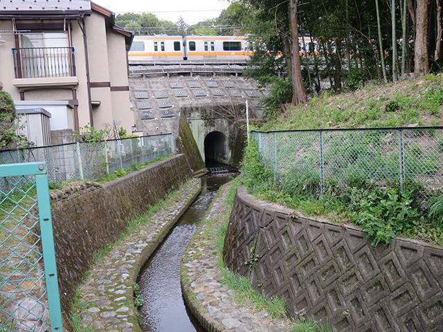 トンネルの中から流れてくる野川