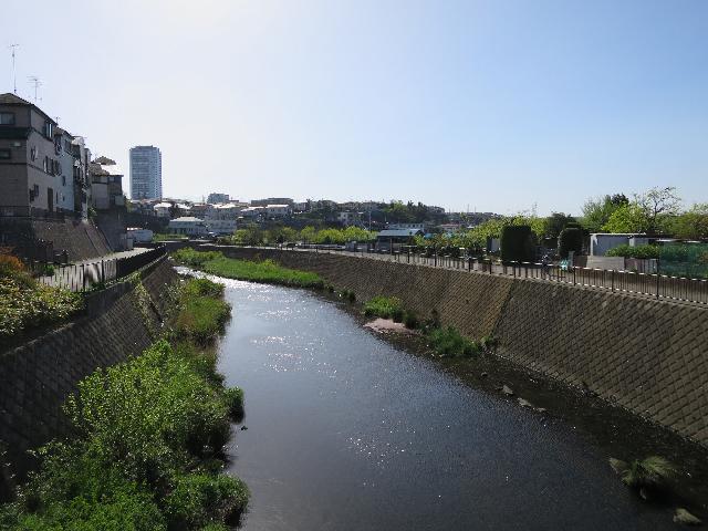 横浜と町田のニュータウンの中を流れる恩田川