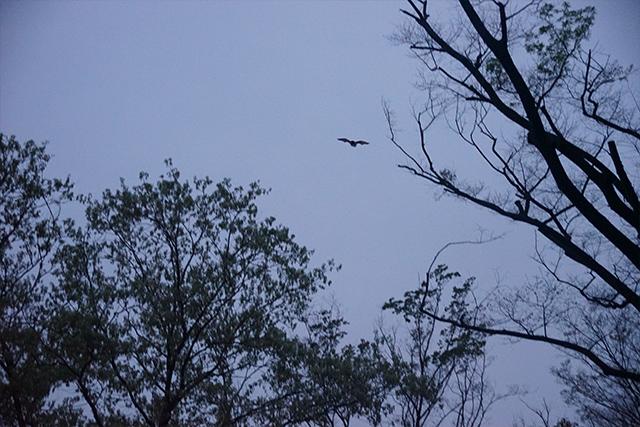 伊藤さんが頑張って撮ったコウモリ。鳥じゃない。