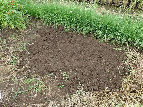 30センチ間隔で10個の球根を植えた。