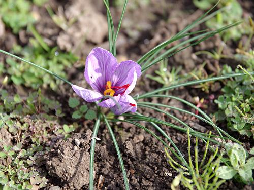 可憐な花なんだけど、いきなり地面から咲いている違和感がすごい