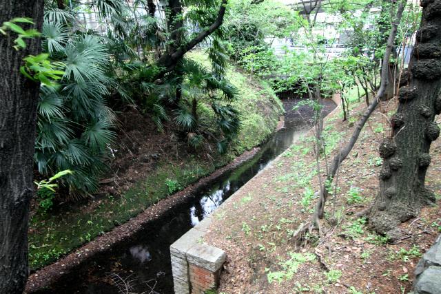 曲線の多い玉川上水も、それはそれで趣きがあるが