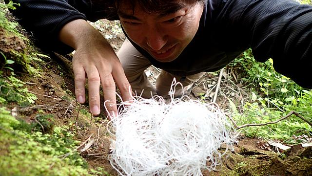 高級食材で知られるツバメの巣を、断崖絶壁に登って採取したい!