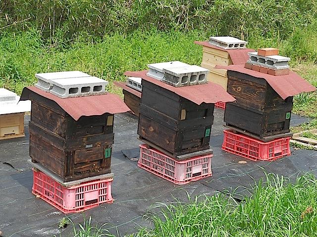 金子さんが管理しているのは奥の4台の巣箱