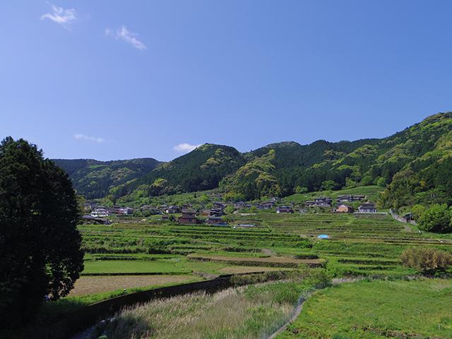 山に向かって伸びてゆく茶畑