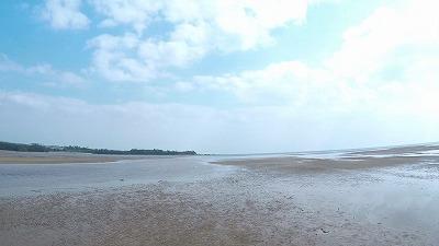 やってきたのは沖縄本島のとある干潟。一面に泥混じりの砂地が広がる。