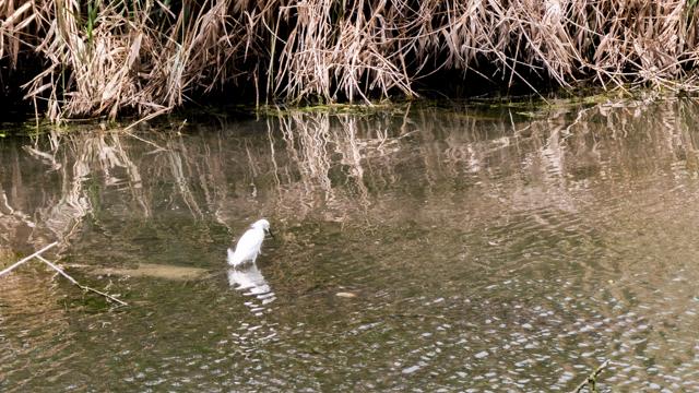 鳥よ、これは池か。