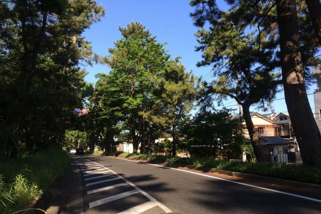 神奈川県西部の国道1号線には、旧東海道の並木が結構残っていて楽しい