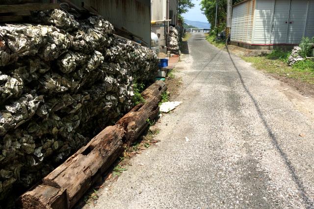 道路には牡蠣の破片が散乱していたのだ(見辛いが、白っぽいのが牡蠣片である)
