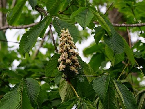 トチの花が咲くと漁期の訪れだという。
