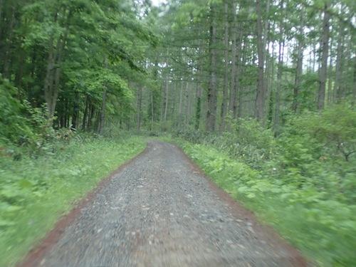 ダート道を車でしばらく走った後、歩いて車道を外れ、沢へ向かう。