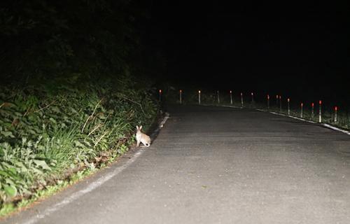 前日の夜、見かけた野ウサギ、これがあの網の中に…。