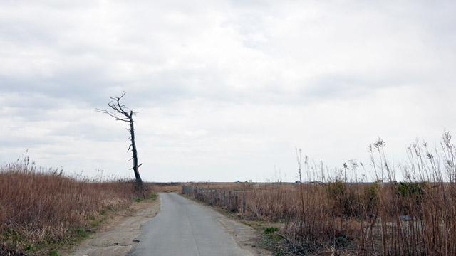 立ち枯れの木がやけにフォトジェニックで、いっそうの寂しさを誘う。スマホで現在地を確認しながら歩かないと、どこに向かってるのか分からなくなる