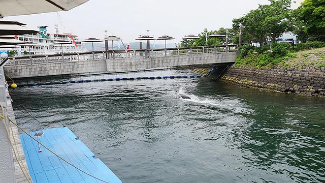 橋の向こうは錦江湾