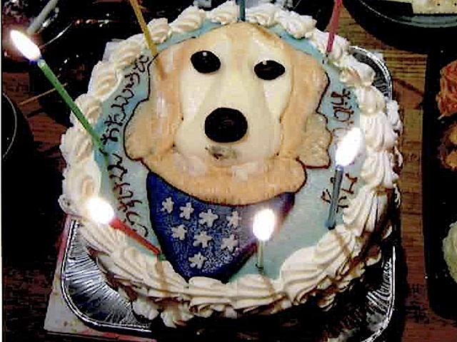 犬用の誕生日ケーキ